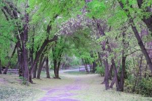 bridal veil walkway