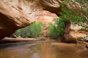 Coyote Gulch Bridge